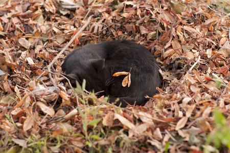 the cat sleeps in fallen leaves