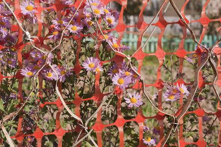 flowers background Zdjęcie Seryjne