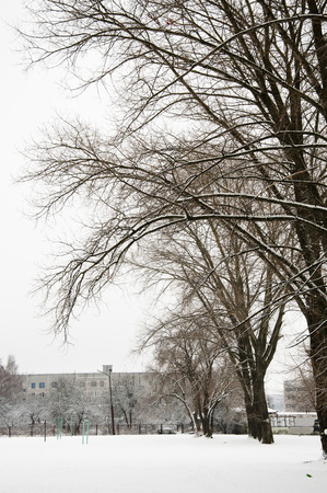 winter background with snow and trees