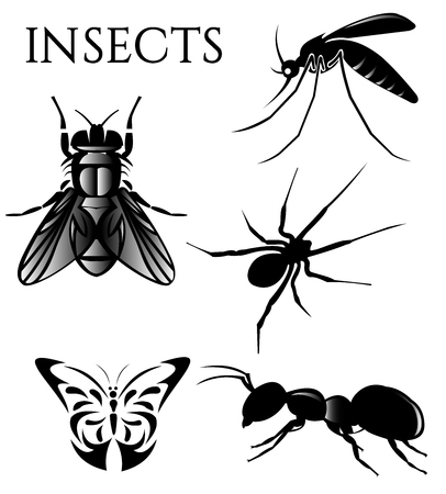 insects set vector deisgn