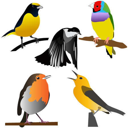 Collection of colorful birds vector illustrations good for kids room decorations ,kids coloring books