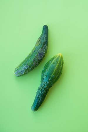 Ugly vegetables, deformed cucumber on a trending green background