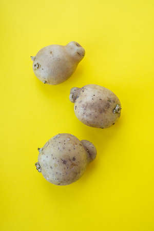 Ugly vegetables, deformed the potatoes in a trendy yellow background Stock Photo