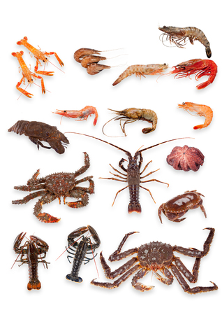 Crustacean collage on white background