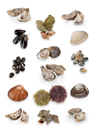 Seafood collage on white background