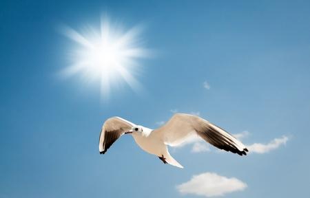 gaviota: Gaviota volando sobre el cielo azul