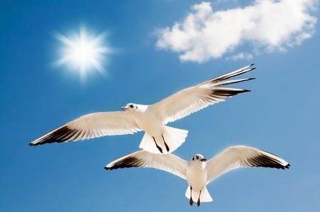 Zwei Möwen sind gegen den blauen Himmel fliegen
