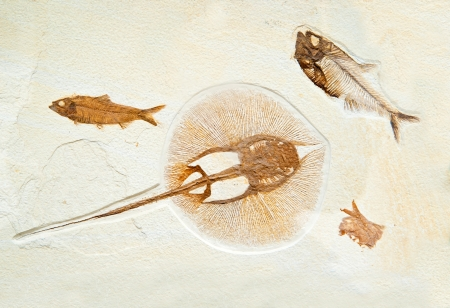 bygone: ancient marine fossils in rock