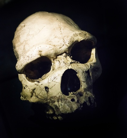 homo sapiens: skull of an ancient Homo heidelbergensis Stock Photo