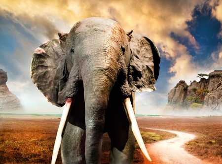 elephant on background of mountain scenery with sunset sky photo