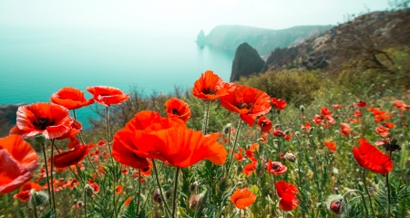 sea flowers: garden with poppy flowers against mountain and sea Stock Photo