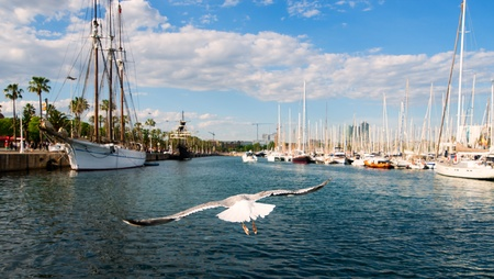 vilamoura: seagull with yachts in the port