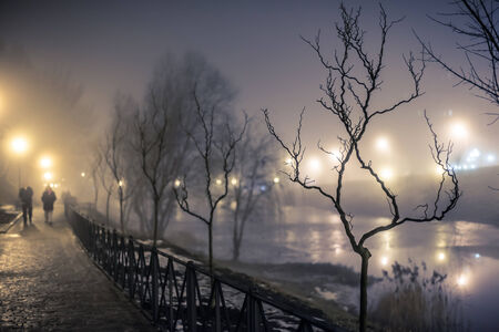 tree in a park at the night fog photo
