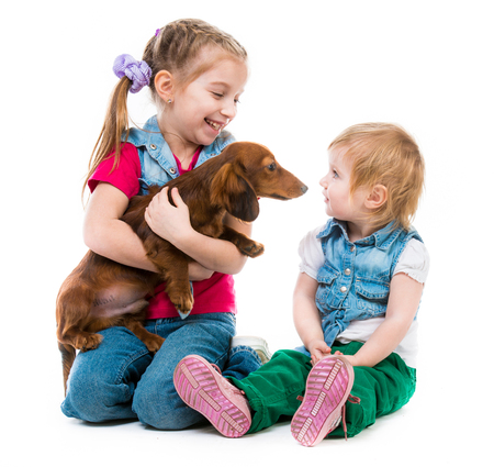 children playing with a red dachshund on white  photo