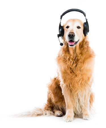 red retriever with headset isoleted  photo