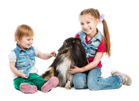 children playing with a dog breed sheltie on white background photo