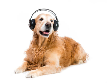 dog in headset isolated on a white background photo
