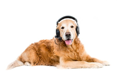 red retriever with headset lying on the floor photo