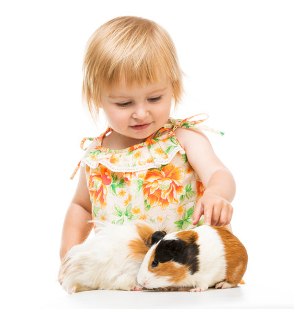 cavie: Bambina bambino sveglio con cavie. Isolato su sfondo bianco.