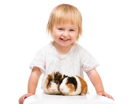 cavie: Bambina bambino sveglio con i porcellini d'India. Isolato su sfondo bianco. Archivio Fotografico