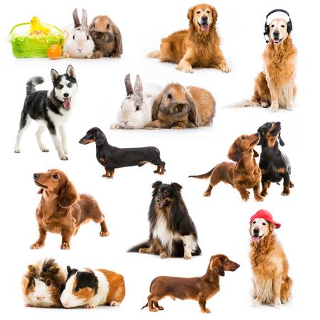 set of pets isolated on white background photo