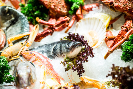 variety of fresh seafood on ice at the market photo