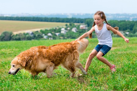 summer dog: little girl walks on the leash with a golden retriever Stock Photo