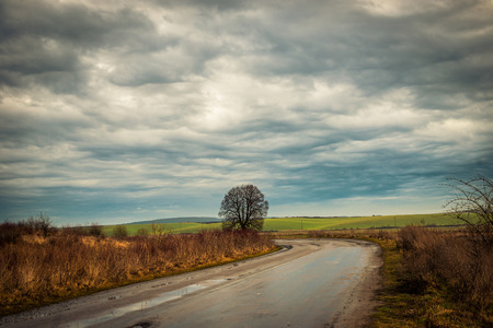 midst: wonderful landscape with lonely tree by country road in the midst of fields Stock Photo