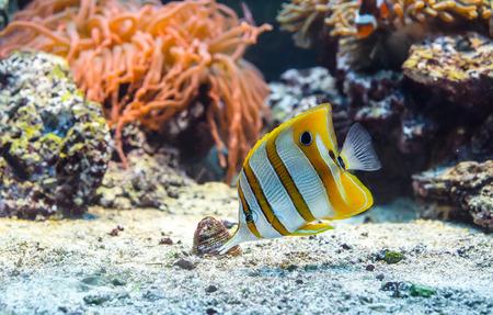 peces de acuario: Imagen subacu�tica de peces tropicales de colores