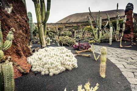 manrique: cactus garden in Guatiza, Lanzarote Spain Stock Photo