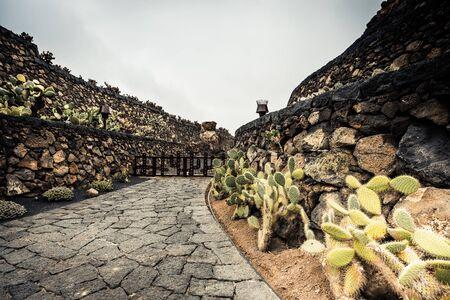 manrique: cactus garden in Guatiza, Lanzarote, Canary Islands