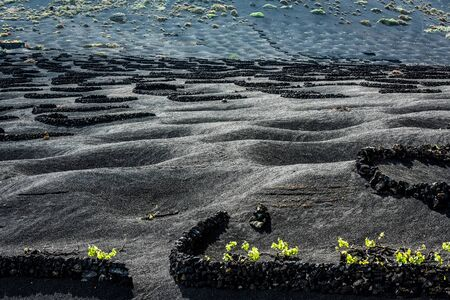 pits: pits for grapes growing in plantation of Lanzarote, Canary Islands, Spain