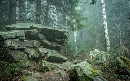 grassy: grassy stone close up in wood in Carpathian mountains Stock Photo