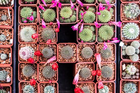 counter top: different kinds of small cactuses on market counter, top view