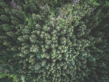 Aerial view of green spruce forest. Tops of fir tree. View from above. Stock Photo