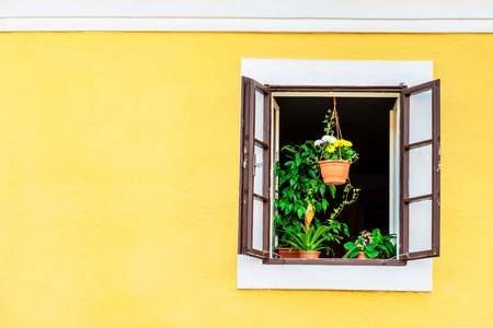 Green house plants on the window sill of the brown opened window on the yellow building Stock Photo