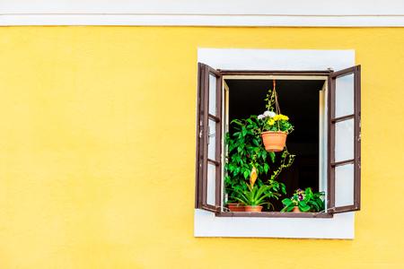 Groene kamerplanten op de vensterbank van het bruine geopende raam op het gele gebouw Stockfoto