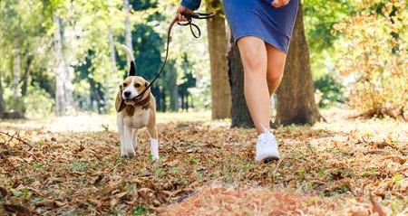 girl running with beagle dog in sunshine autumn park Stock Photo