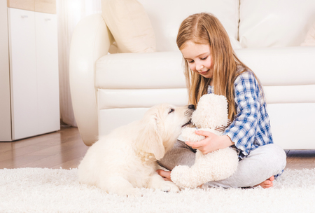 Little girl playing with teddy bear and fluffy retriever puppy