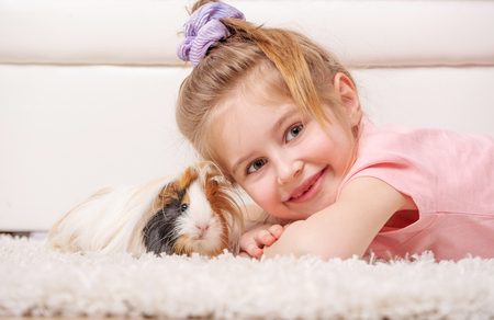 little girl with holds big hairy guinea pig in hands