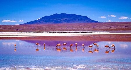 Pink flamingos at exciting lagoon scenery in Bolivia 写真素材