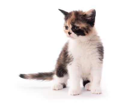 Little cute kitten isolated on white Stock Photo