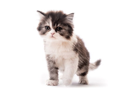 Little cute kitten isolated on white background Stock Photo