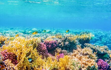 underwater view with tropical fish and coral reefs