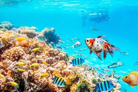 Récifs coralliens et poissons, monde sous-marin
