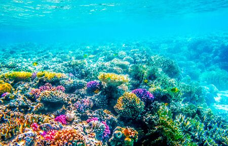 Beautifiul underwater seascape with tropical fish and coral reefs 版權商用圖片