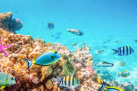 Coral reefs and fish and diver, underwater world