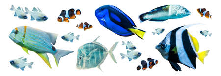 Colorful marine fish isolated on white background 版權商用圖片