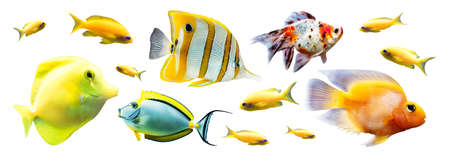 Exotic reef fish isolated on white background