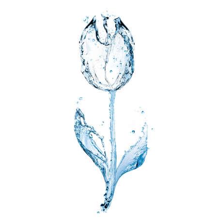 Beautiful transparent aqueous tulip isolated on white background
